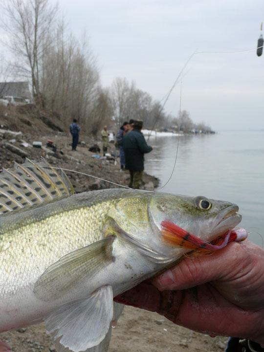 Способы ловли рыбы на Оби